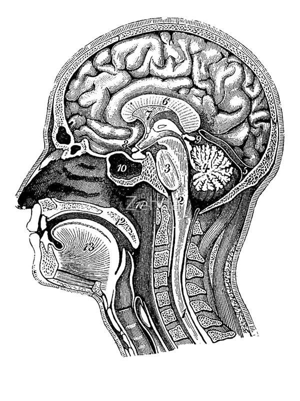Matériel de Simulation de Neurologie - Twin Medical