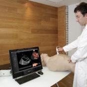 U/S Mentor Mannequin homme- Simulateur d'échographie par réalité virtuelle
